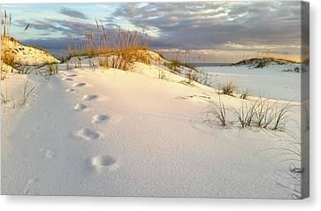 Canvas Print featuring the photograph Walking In Destin by JC Findley