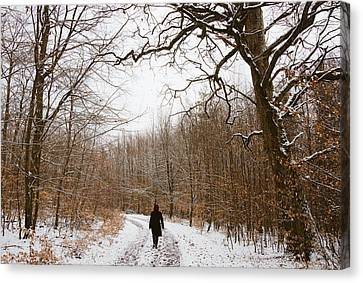 Walking In The Winterly Woodland Canvas Print by Matthias Hauser
