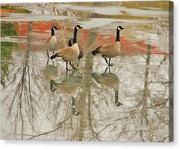Walking On Thin Ice Canvas Print by Joy Bradley