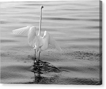 Canvas Print featuring the photograph Walking On Water by Daniel Woodrum