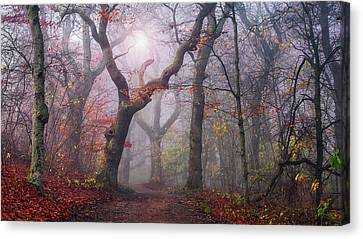 Walking The Old Path. Canvas Print