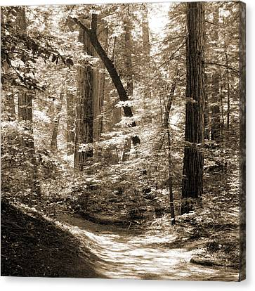 Walking Through The Redwoods Canvas Print by Mike McGlothlen