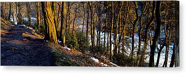 Walkway Passing Through The Forest Canvas Print by Panoramic Images