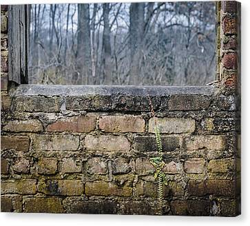 Wall And Window Canvas Print by Steve Stanger