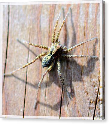 Wall Spider Canvas Print by Tommytechno Sweden