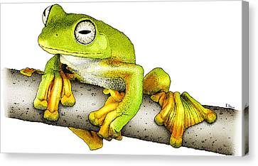 Wallaces Flying Frog Canvas Print by Roger Hall