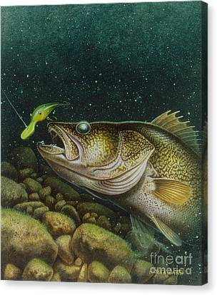 Walleye And Crank Bait Canvas Print by Jon Q Wright
