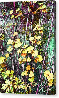 Climbing Canvas Print - Wallington Hall Vine by Wendy Boomhower