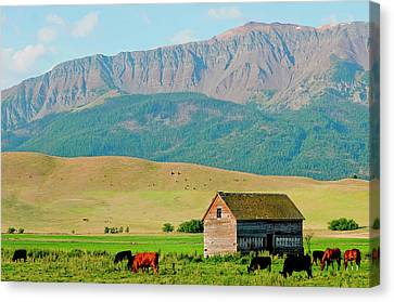 Wallowa Mountains And Barn In Field Canvas Print by Nik Wheeler