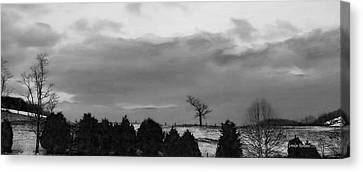Walnut Tree In Bw Canvas Print by Denise Romano