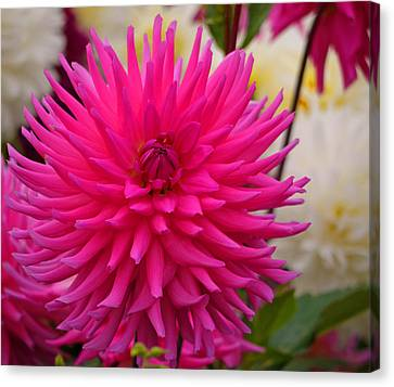 Canvas Print featuring the photograph Walter Huston - Dahlia by Jordan Blackstone