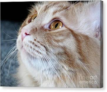 Walter The Cat Canvas Print
