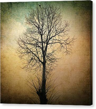 Waltz Of A Tree Canvas Print by Taylan Apukovska