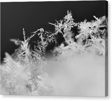 Waltz Of The Snowflakes Canvas Print