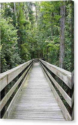 Canvas Print featuring the photograph Wander by Laurie Perry
