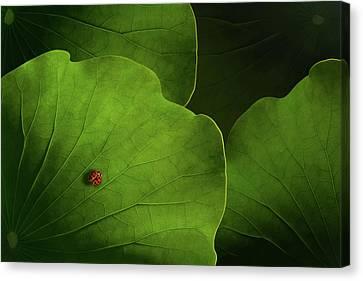 Lotus Leaves Canvas Print - Wanderlust by Heather Bonadio