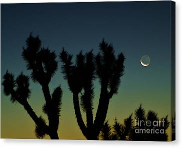 Waning Canvas Print by Angela J Wright