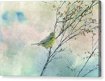 Warbler In A Huckleberry Bush Canvas Print by Peggy Collins
