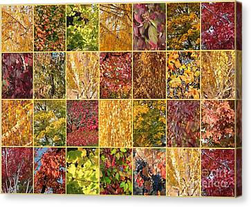 Warm Autumn Quilt Collage Canvas Print by Carol Groenen