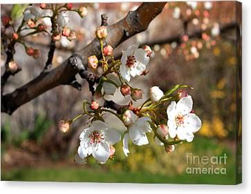 Spring Scenes Canvas Print - Warm Spring Canvas by Carol Groenen