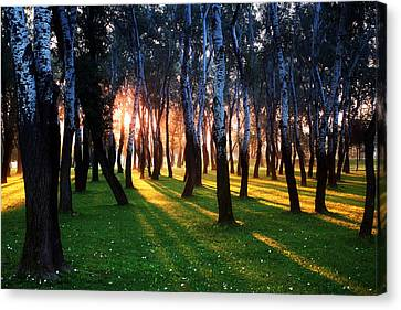 Warming Up The Land Canvas Print by Daniel Zrno