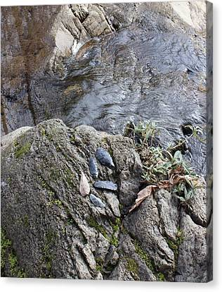 Warrior Crossing  Canvas Print by Tim Rice
