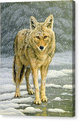 Coyote Canvas Print - Wary Approach - Coyote by Paul Krapf