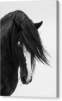 Wild Horses Canvas Print - Washakie's Portrait by Carol Walker