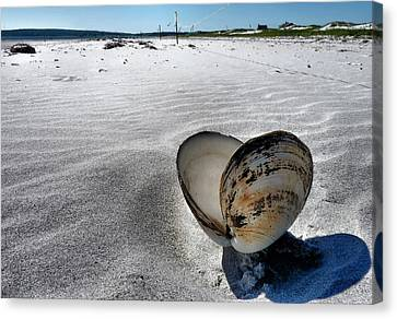 Canvas Print featuring the photograph Washed Ashore by Janice Drew