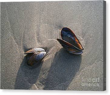 Washed Up Canvas Print by Drew Shourd