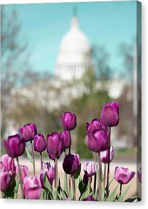 Washington Dc Canvas Print by Kim Fearheiley