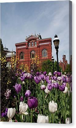Washington Dc, Tulips At The Smithsonian Canvas Print