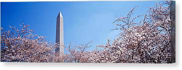 Washington Monument Behind Cherry Canvas Print by Panoramic Images