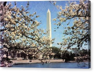 Washington Monument Cherry Blossoms Canvas Print by Spyder Webb