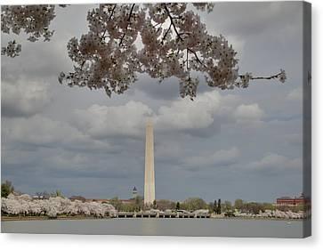 Washington Monument - Cherry Blossoms - Washington Dc - 011330 Canvas Print by DC Photographer