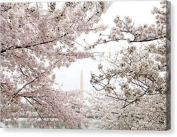 Washington Monument - Cherry Blossoms - Washington Dc - 011343 Canvas Print by DC Photographer