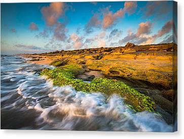 Washington Oaks State Park Coquina Rocks Beach St. Augustine Fl Beaches Canvas Print by Dave Allen