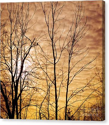 Washington's Winter Sky Canvas Print