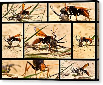 Canvas Print featuring the photograph Wasp And His Kill by Miroslava Jurcik
