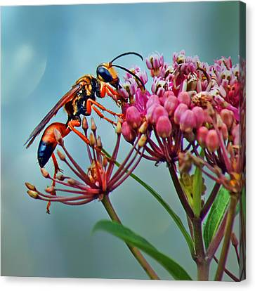 Terrestrial Canvas Print - Wasp On Milkweed by Nikolyn McDonald