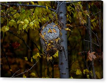 Wasp's Nest Canvas Print by Jerome Lynch