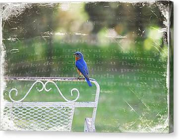 Watchful Bird Canvas Print