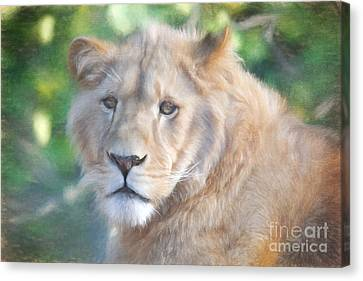 Watchful Eye Canvas Print by Jayne Carney