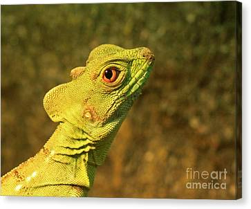Watchful Eye Of The Green Basilisk Lizard  Canvas Print by Inspired Nature Photography Fine Art Photography