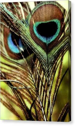 Watchful Eyes Canvas Print by Darlene Kwiatkowski