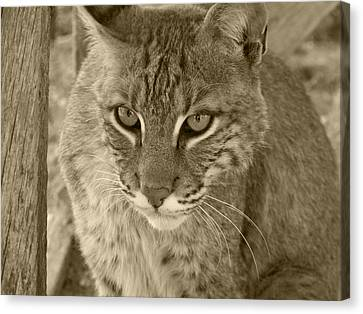 Watchful Eyes-sepia Canvas Print by Jennifer  King