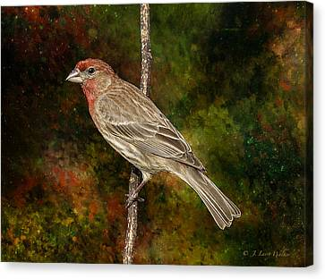 Canvas Print featuring the digital art Watchful House Finch by J Larry Walker