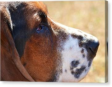 Canvas Print featuring the photograph Watchful by Mary Zeman
