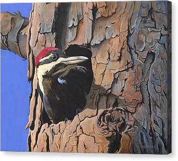 Watchful Woodpecker Canvas Print by Kirsten Wahlquist