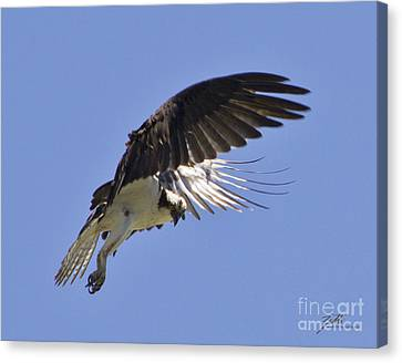 Canvas Print featuring the photograph Watching 4 by Suzette Kallen